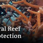 Dominican Republic: Tourism killing coral reefs | Global Ideas