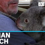 """Sanctuary keeping animals busy to give them their daily """"fix"""" of human attention   ABC News"""