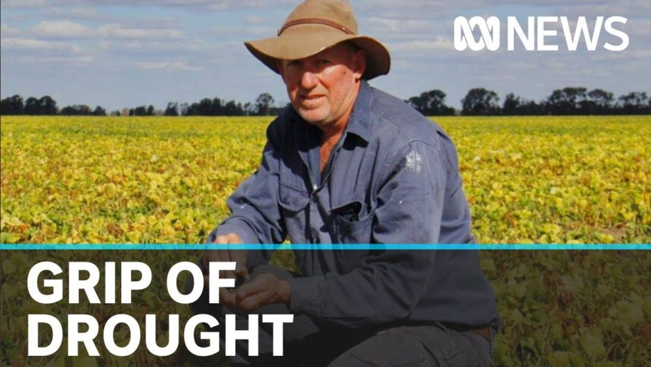 Australian drought continues despite recent rains, as coronavirus dries up donations | ABC News
