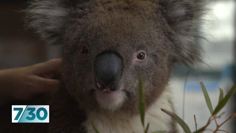 Animal sanctuaries are doing it tough during the coronavirus crisis | 7.30
