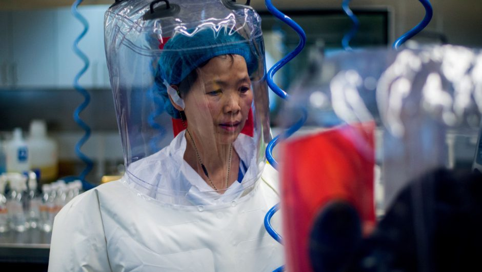 China's 'bat-woman' researcher warns coronavirus 'just tip of the iceberg' and world will soon face even worse pandemics