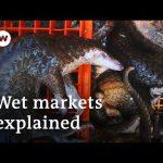 Will the coronavirus pandemic force China to close wildlife markets? | DW News
