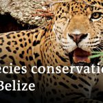 Belize: Animal protection during the coronavirus pandemic | Global Ideas