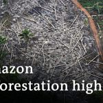 Amazon deforestation surges in brazil | DW News