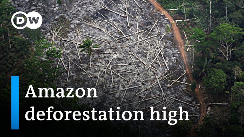 Amazon deforestation surges in brazil | DW News