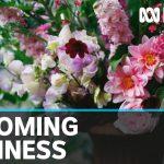 COVID-19 restrictions an unexpected bonus for Australian flower farms | ABC News