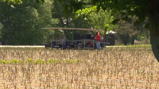 At least 125 migrant workers at one Ontario farm have tested positive for COVID-19