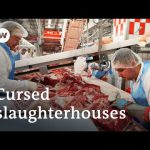 Coronavirus curses a German meat-processing plant | Focus on Europe
