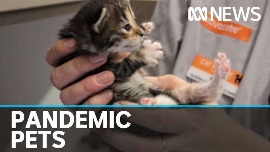 Coronavirus prompts increase in animal adoptions | ABC News