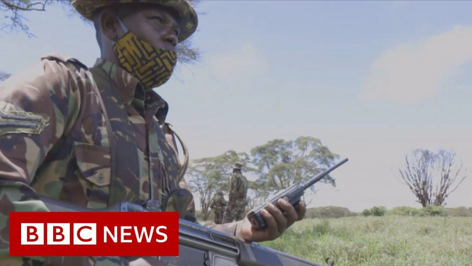 How the Covid-19 pandemic is threatening Africa's wildlife – BBC News