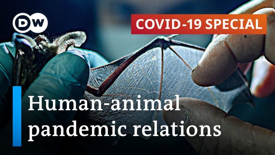 How COVID-19 impacts human-animal coexistence | COVID-19 Special
