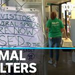 Animal shelters grapple with coronavirus pandemic impact | ABC News