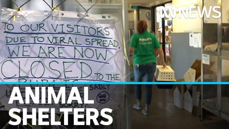 Animal shelters grapple with coronavirus pandemic impact | ABC News