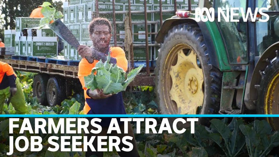COVID-19 Job seekers turn to farmers for jobs | ABC News