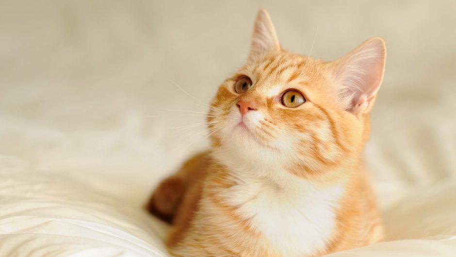 Pets boosting morale during coronavirus pandemic, study says