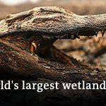 Blazes devastate huge parts of Brazil's Pantanal wetlands | DW News