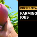 Summer harvest in jeopardy, Government promotes farm work to young Australians | ABC News