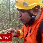 Brazil's Amazon: Fireman 'saving what's not burnt' – BBC News