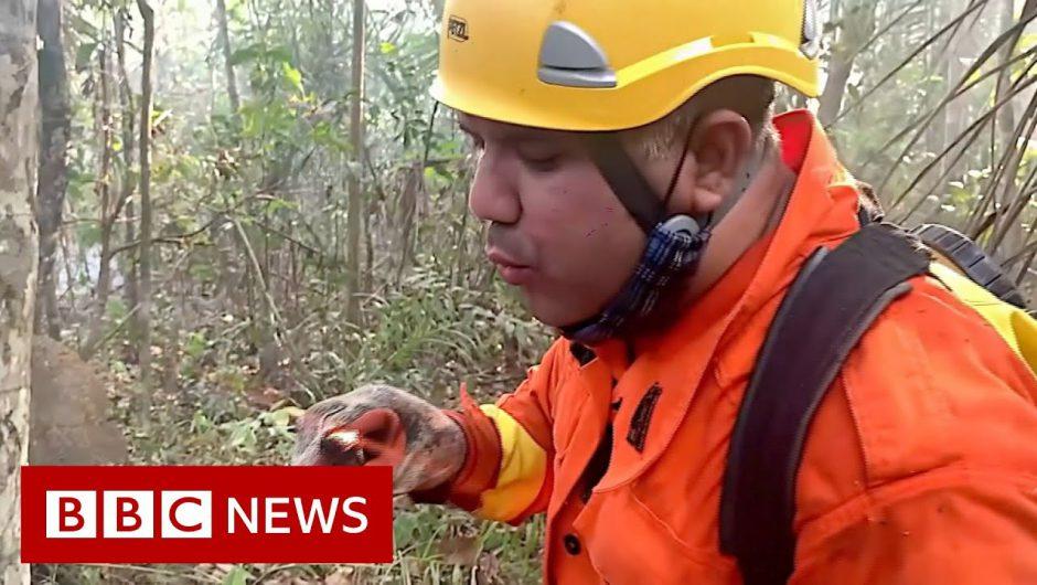Brazil's Amazon: Fireman 'saving what's not burnt' – BBC News