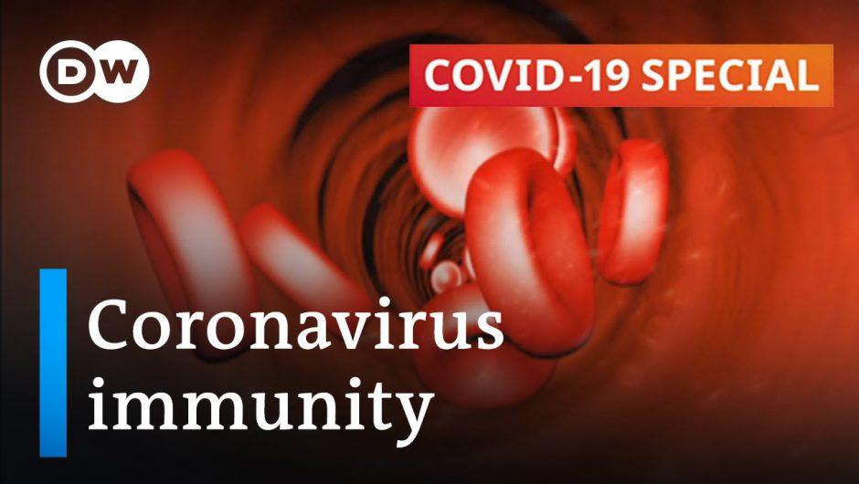 How long does immunity against the coronavirus last? | COVID-19 Special