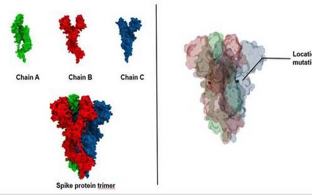Explainer   What is the D614G mutation in coronavirus?