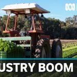 Coronavirus pandemic driving strong demand for local fruit and vegetables | ABC News