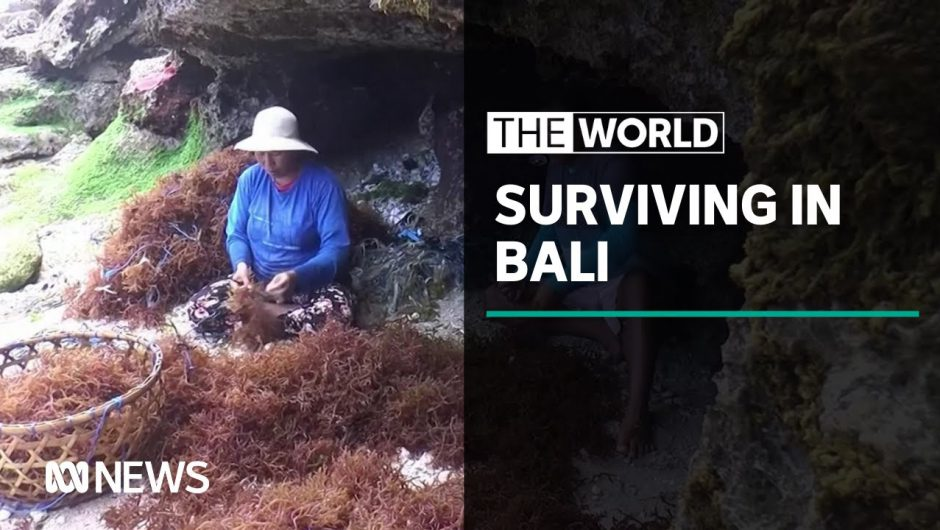 Bali locals turn to seaweed farming to survive through COVID-19