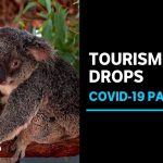 Bushfires, coronavirus, have ravaged the tourism industry and the worst is yet to come | ABC News