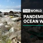 Study: more plastic waste due to coronavirus | The World
