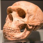 How Neanderthal DNA affects human health — including the risk of getting Covid-19