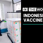 Indonesia 'taking a risk' on coronavirus vaccine from China's Sinovac | The World