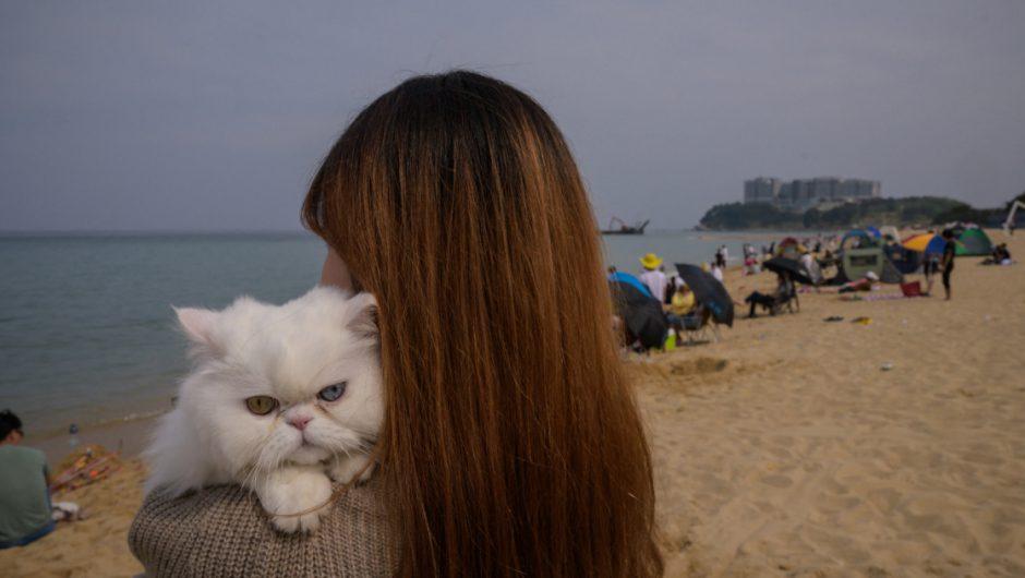 South Korea's Seoul to test pet cats, dogs for COVID | Coronavirus pandemic News