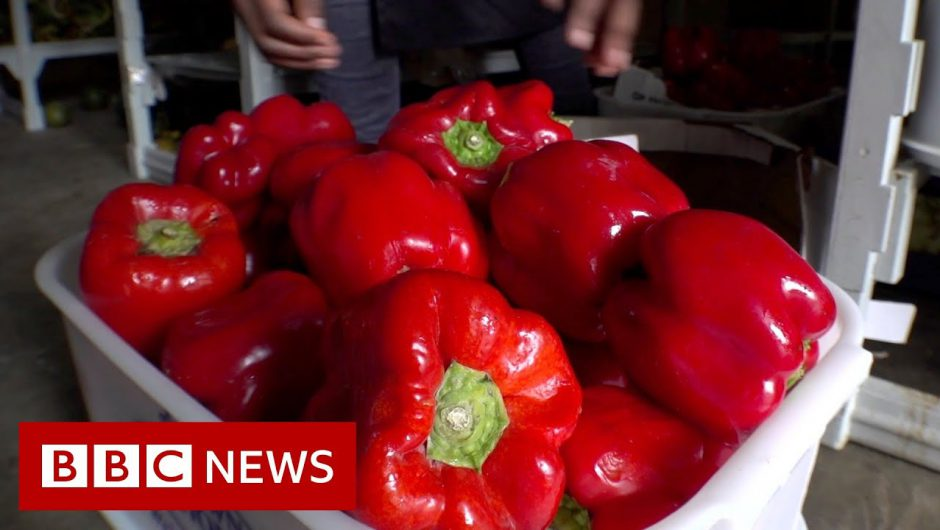 Tackling food waste in South Africa – BBC News