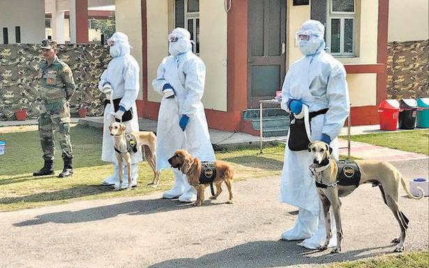 Coronavirus   Army raises a specialist unit to 'sniff out' COVID-19