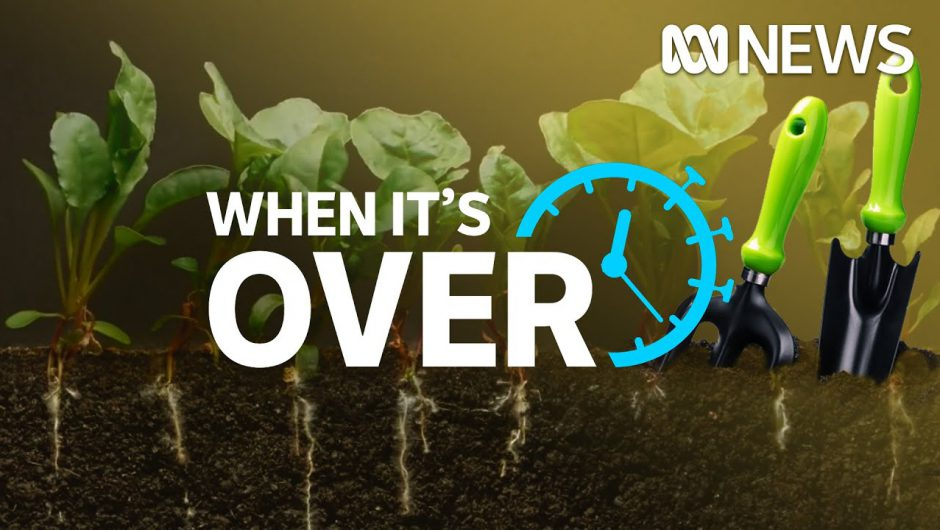 Gardening and growing food at home has become popular amid the coronavirus pandemic   ABC News
