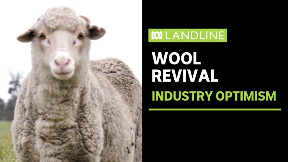 Optimism in Australia's wool industry as market recovers from COVID-19 havoc | Landline