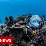 Philippines reef littered with face masks – BBC News