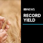 Australian farms post record year with $66 billion of produce | ABC News