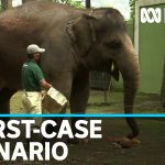 Coronavirus lockdown sees Indonesian zoos face heart-breaking future possibility | ABC News